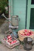 Granatapfelernte in Körben und Gießkannen aus Metall