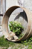 Sträusschen aus Kamille und Minze mit altem Holzring an der Hauswand