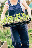 Woman Carries Young Plants In Pot Palette With Kohlrabi And Beetroot