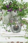 Windlicht und Blaue Luzerne (Medicago sativa) auf Gartentisch