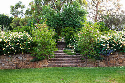 Sodium stone stairs surrounded by blooming roses in a landscaped garden