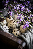 Quail eggs in a box