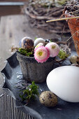 Small Pot With Flowers Of Daisies And Quail Eggs
