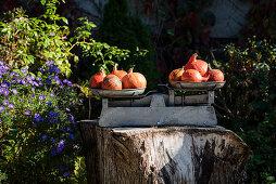 Pumpkins On Old Libra