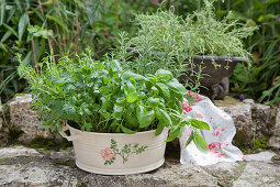 Kitchen herbs in zinc tub decorated with floral motif