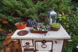 Vintage baking dish, succulents, bird ornament, cake tins and lanterns on old wood-fired stove used as decoration in garden