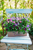 Horn violets in wooden basket