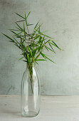 Bamboo stems in glass bottle