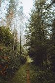 Schmaler Wanderweg durch den herbstlichen Wald