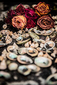 Seashells and dried roses