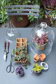 Seedlings, materials and gardening utensils