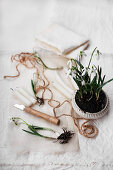 Potted snowdrops, twine, knife and candles