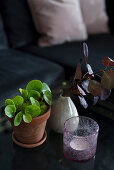 Tealight holder, houseplant in terracotta pot and vase of leaves arranged on coffee table