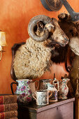 Stuffed ram's head above collection of china pots