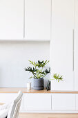 Green plant on a simple white built-in wardrobe wall