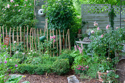 Boxwood garden with roses and shabby chic garden decorations