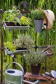 Herbal arrangement