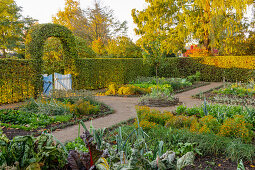 Vegetable garden in morning sun (district teaching garden, Steinfurt, Germany)