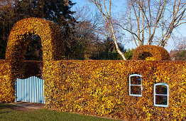Autumn beech hedge with window and garden gate (Kreislehrgarten, Steinfurt, Germany)