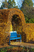 Blue garden bench in front of autumnal beech hedge (Kreislehrgarten, Steinfurt, Germany)