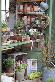 Potting table decorated with spring flowers, wooden crates and terracotta pots