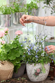 Handmade wire plant support in potted forget-me-nots