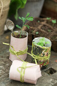 Pea seedling in paper pot with spoon as plant label