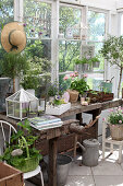 Old workbench used as potting bench in greenhouse
