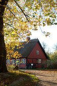 Red half-timbered house with thatched roof in autumn