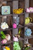 Spring flowers in old display case