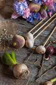 Garlic, onions, flower bulbs and radishes