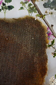 Honeycomb in front of a wallpaper with a geranium motif