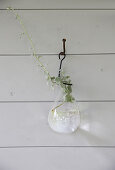 A cutting in a glass vase hanging on the wall