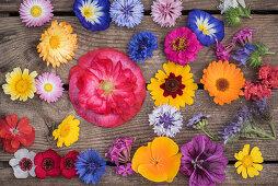 Tableau of annual summer flowers