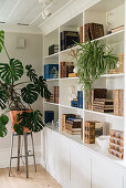 Swiss cheese plant next to white shelves holding old books and spider plant