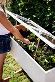 Girl checks the young plants in the DIY mini-greenhouse