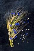 Gerste und Kornblumen als Legebild auf dunklem Untergrund