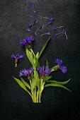 Perennial cornflowers on dark surface
