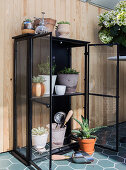 Black display case used as greenhouse for succulents