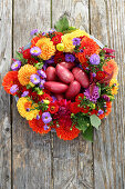 Potatoes in wreath of dahlias, zinnias, asters and amaranth
