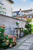 Hydrangeas in small seating area against garden wall