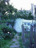 Fence, garden gate and bed of peonies and roses in small urban garden