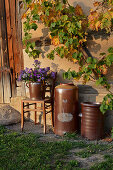 Stoneware pots and bouquet of Michaelmas daisies below vine on barn wall