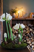 Bowl planted with white amaryllis, hyacinths and moss