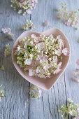 Hydrangea flowers in heart-shaped bowl