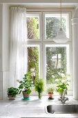 Geraniums and kitchen herbs on kitchen windowsill behind sink