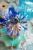 Blue agapanthus in copper vase