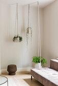 Plants in modern hanging baskets in living room