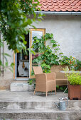 Seating area on terrace outside house with vines growing on wall