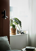Houseplant and ornaments on wide windowsill next to reading lamp on brown wall